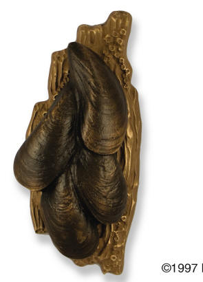 Mussel Shell Door Knocker