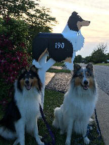 Collie Mailbox with happy customers
