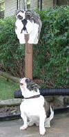 "The Real ""Newman"" with his Mail Box custom painted brindel bulldog mailbox"